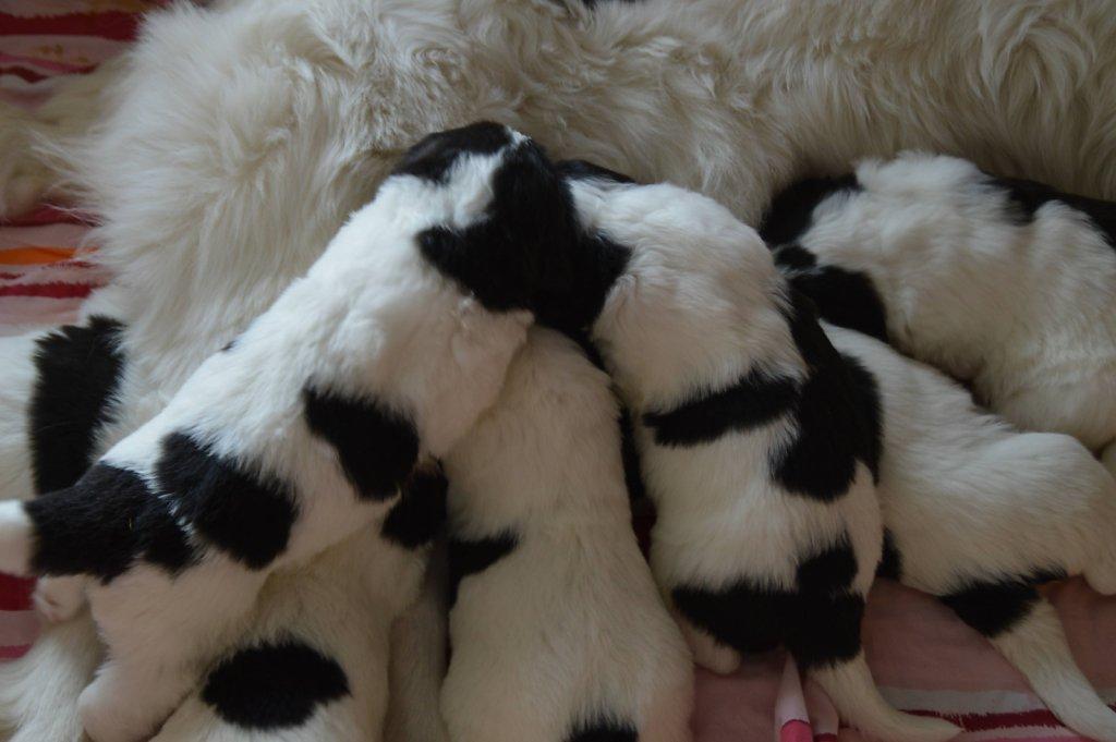 Polly-Babies-4Woche-008-verkleinert.jpg