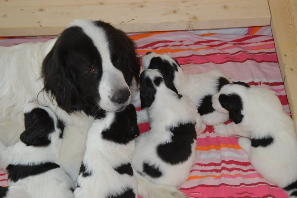 Polly-Babies-4Woche-011-verkleinert.jpg